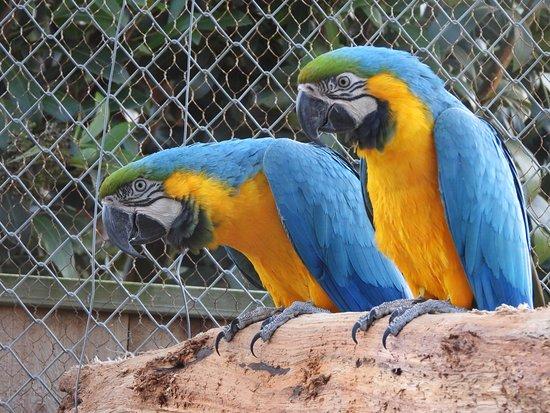 Palmerston North, Nova Zelândia: Mr and Mrs macaw