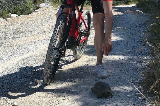 Cycle+hike Hellas