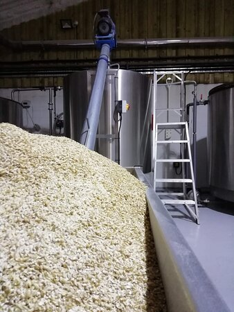 grain ready to go to the mash tun.  Brewing Hampshire beer in the Hampshire countryside.