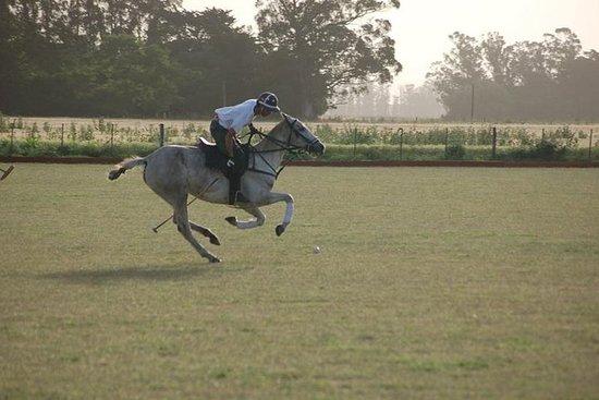 Horse & Polo Trip in Mar del Plata, Argentina