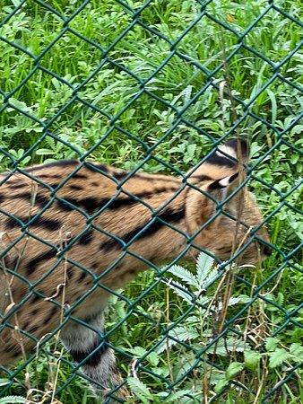 The Lake District Wildlife Park (Bassenthwaite) - 2020 All ...