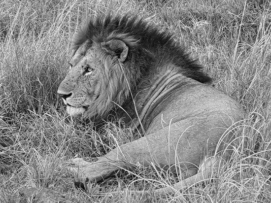 Kenia Tours & Safaris Ltd fotografia