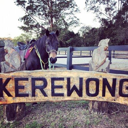 Southern Cross Horse Treks
