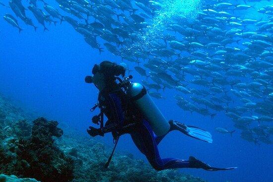 Giornata delle immersioni