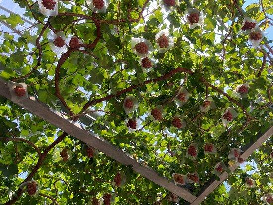Hagihara Fruit Farm