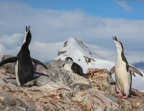 אנטארקטיקה: Antartide 62