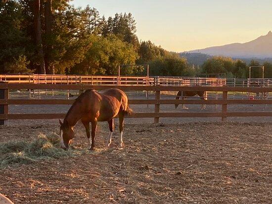 Black Butte Ranch Photo