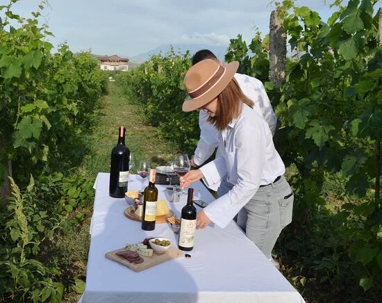 Kucove, Αλβανία: Wine tasting