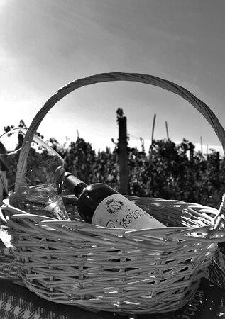 Kucove, Αλβανία: White wine