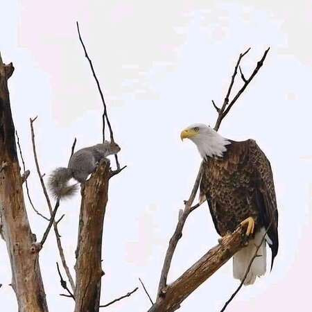 Africa fish Eagle and Cicero