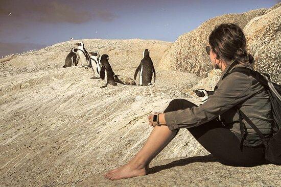 Cape Peninsula - Cape Point, Seals ...