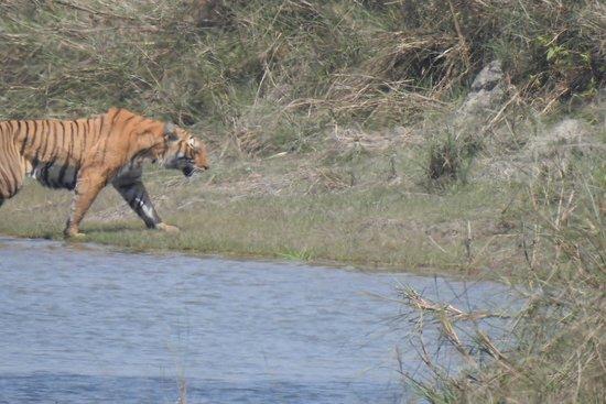 Thakurdwara照片