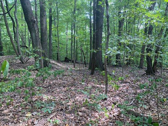 Boone Hollow Wildlife Preserve