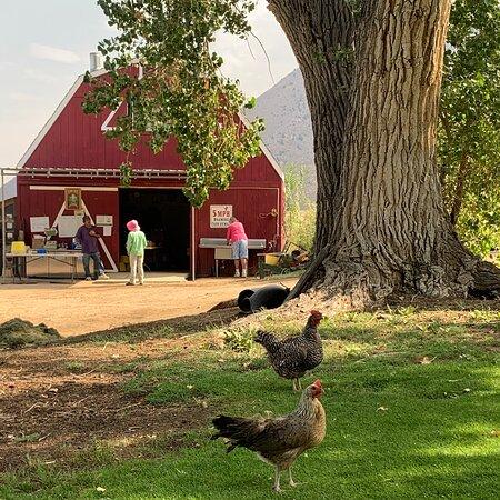 Apple Hill Ranch