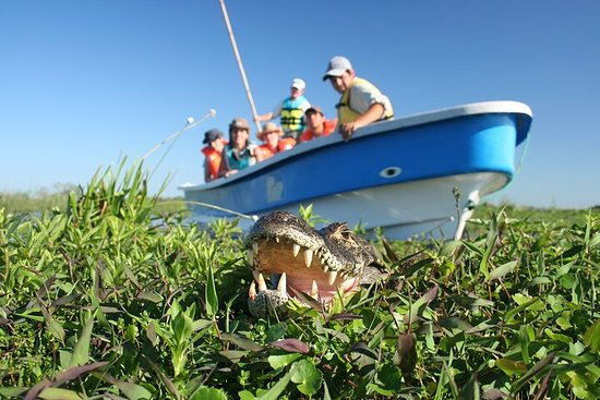 5-Day Ibera Marshlands & Iguazu Falls Tour
