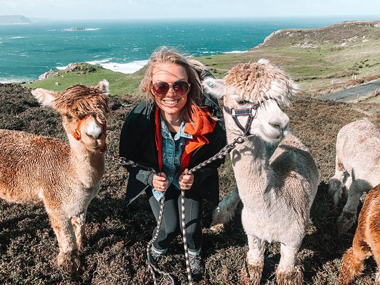 Wild Alpaca Way