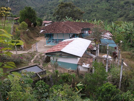 This farm has a history of four generations dedicated to specialty coffee crops in Genova Quindio Colombia. here we grow boutique Colombia Aromagenoves coffee.