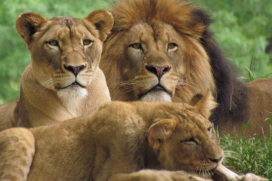 Sidai Select Safaris