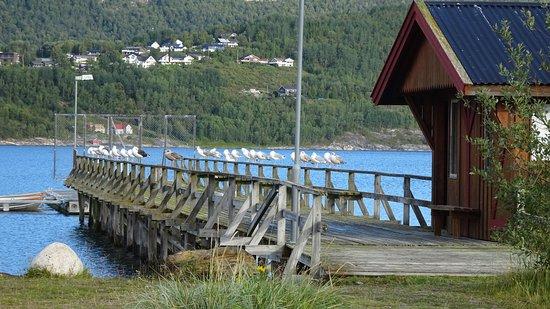 Möwen säumen Pier vor Rognan Fjordcamp