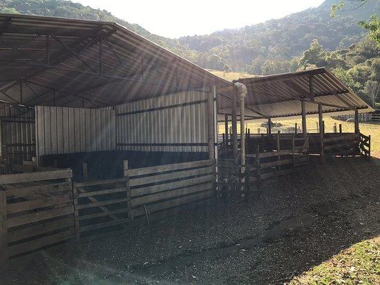 Sao Joao Das Tres Ovelhas