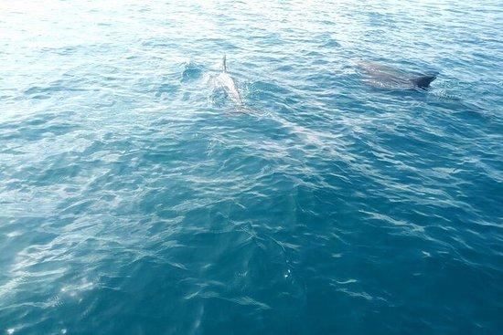Dolphin tour by Ghalib