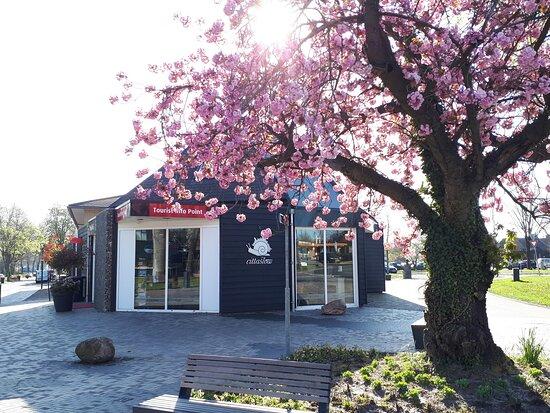 Borger, Hà Lan: getlstd_property_photo