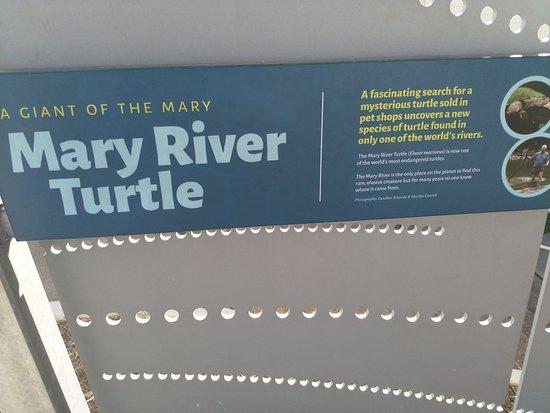 Tiaro, أستراليا: Tiaro Memorial Park