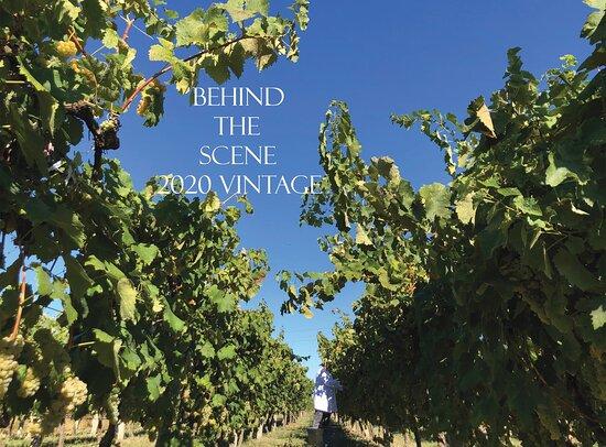 Kantina Edoni - Edoni Winery