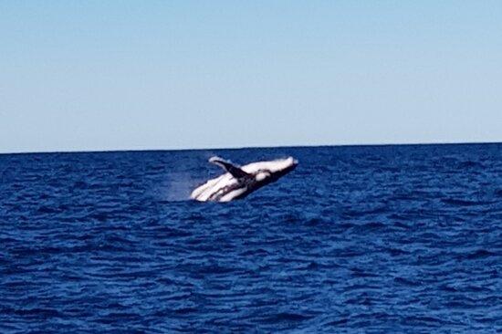 Whale Watching Yamba