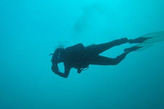 Zissou Divers