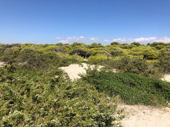 Astor Beach