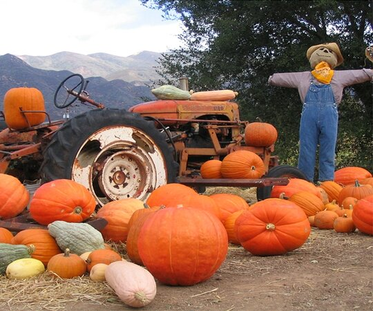 Boccali Ranch Pumpkin Patch