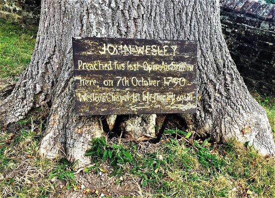 John Wesley's Last Open Air Sermon Tree