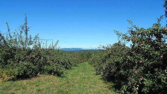 Sebago, ME: Apple trees with White Mountain views!