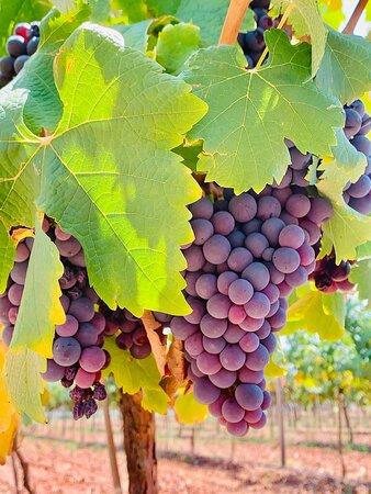 Beautiful Winery, very nice wine