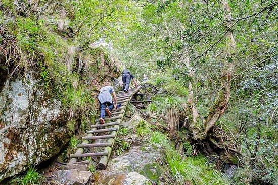 Skeleton Gorge to Table Mountain Summit ...