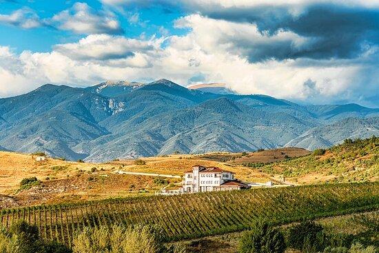 Wine Tasting & More in Villa Melnik...