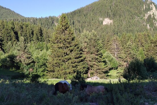 Horse Riding in the Heart of the...