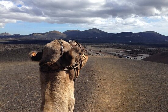 Camel ride in timanfaya national park
