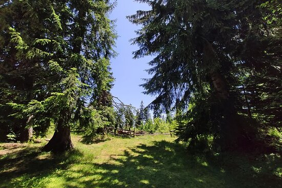 Local Adventures in the Rhodope Mountains