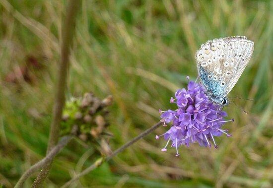 Handcross, UK : Lovely butterfly
