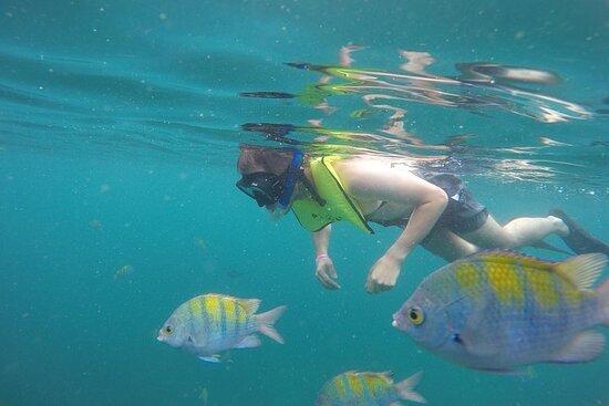 Calypso's Tortuga Island Day Trip...