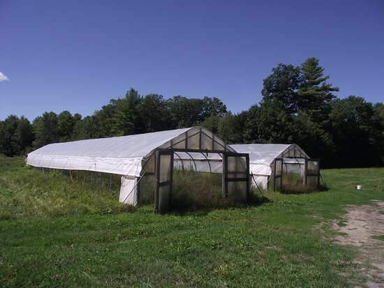West Buxton, ME: ME - BUXTON - SNELL FARM - TWO OTHER GREENHOUSES