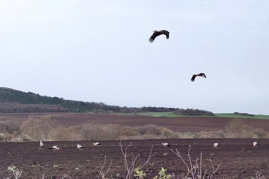 Observation d'oiseaux privée à 3...