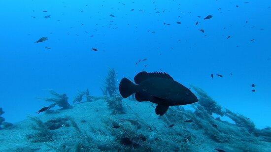 DiveBase Malta