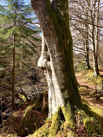 Look 👀 - The mystical Merlin 🧙🏻♂️tree.