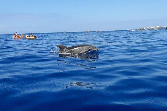 Safari en kayak con delfines y...