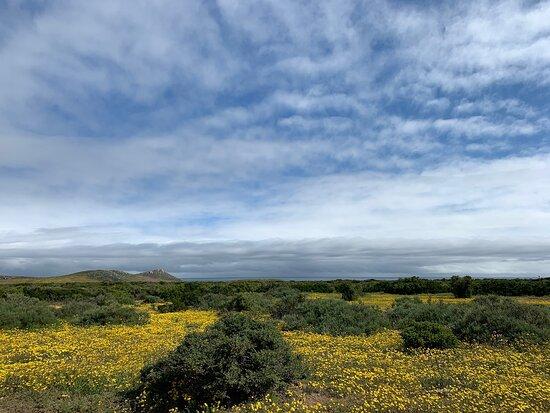 West Coast National Park foto