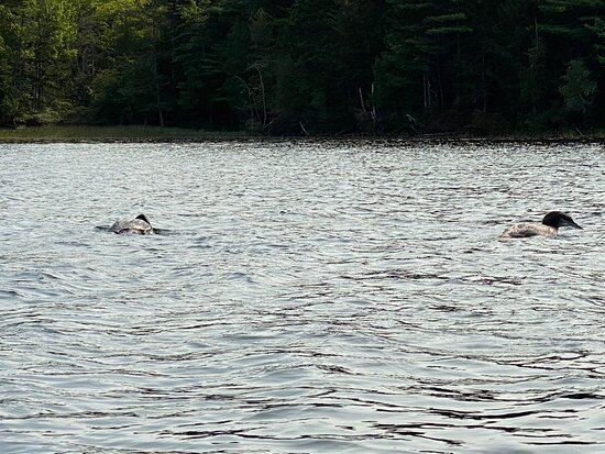Kayaking - Great!  Rental Experience - Not So Great!
