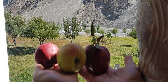 Gulmit, ปากีสถาน: Fresh from the farm apples for breakfast